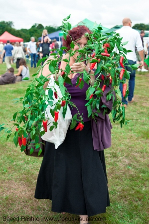 Spectacular chilli plants to buy
